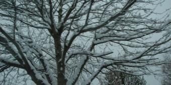 Winter_3_2014